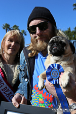 Pug Pageant 2013 winner