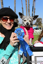 Chihuahua Beauty Contest 2013 winner