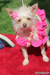 Haute Dogs Pageants; Long Beach, Calif.